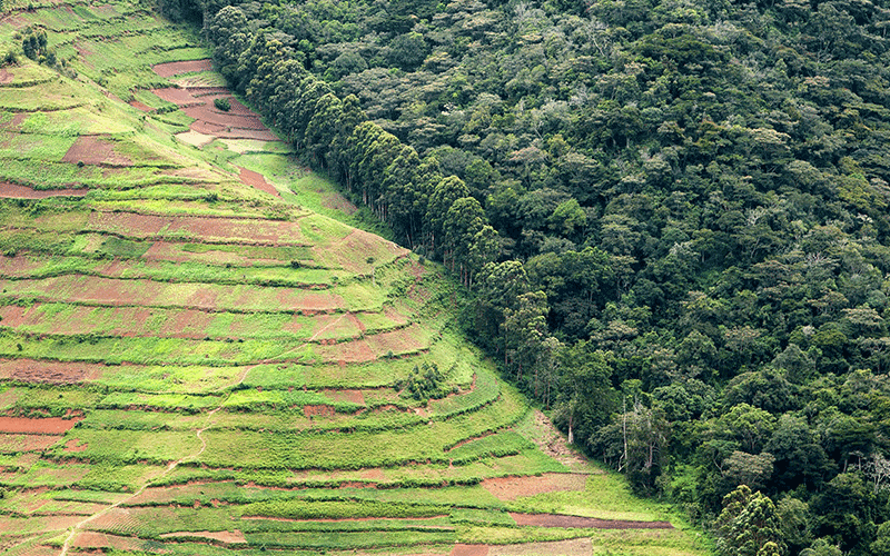 Forum For The Future annual report design deforestation